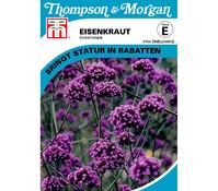 Thompson & Morgan Samen Eisenkraut 'Bonariensis'