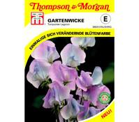 Thompson & Morgan Samen Gartenwicke 'Turquoise Lagoon'