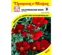 Thompson & Morgan Samen Kalifornischer Mohn 'Red Chief'