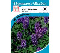 Thompson & Morgan Samen Katzenminze 'Blue Moon'