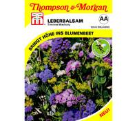 Thompson & Morgan Samen Lederbalsam 'Timeless Mischung'