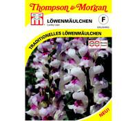 Thompson & Morgan Samen Löwenmäulchen 'Lucky Lips'