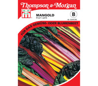 Thompson & Morgan Samen Mangold 'Bright Lights'