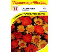 Thompson & Morgan Samen Ringelblume 'Citrus Cocktail'