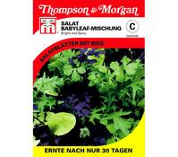 Thompson & Morgan Samen Salat Babyleaf-Mischung 'Bright and Spicy'