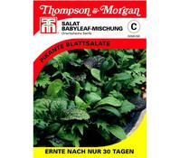 Thompson & Morgan Samen Salat Babyleaf-Mischung 'Orientalische Senfe'