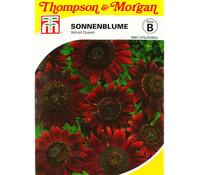 Thompson & Morgan Samen Sonnenblume 'Velvet Queen'