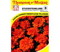 Thompson & Morgan Samen Studentenblume 'Marigold-Durango'