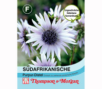 Thompson & Morgan Samen Südafrikanische Purpur-Distel
