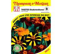 Thompson & Morgan Samen Tagetes 'Pots of Gold'