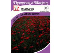 Thompson & Morgan Samen Wildblume 'Klatschmohn Flanders'