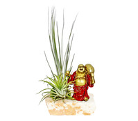 Tillandsien-Arrangement, 2 Pflanzen + 1 Buddhafigur