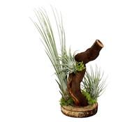 Tillandsien-Arrangement, 3 Pflanzen + 1 Mopani-Holz