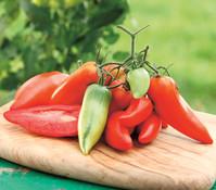 Tomate 'Andenhörnchen'