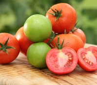Tomate 'Philona', veredelt