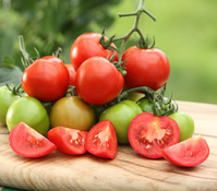 Tomate, rot