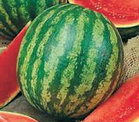 Wassermelone, veredelt