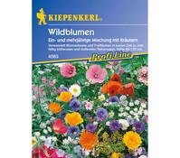 Wildblumen mit Kräutern Mix, Saatgut von Kiepenkerl