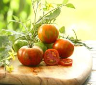 Zebra-Tomaten