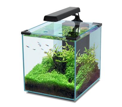 Aquatlantis aquarium nano cubic 30 dehner garten center - Nano aquarium deko ...