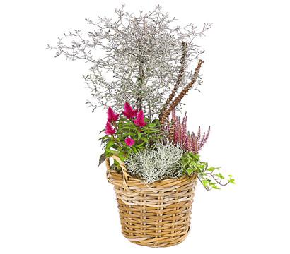 Bepflanzter Korb 'Velvet'