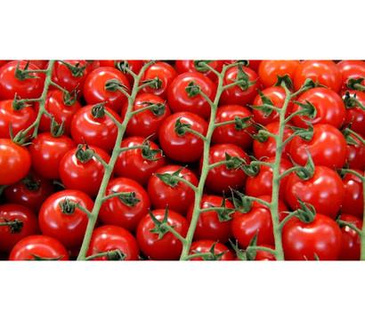 Bioland Cherrytomate