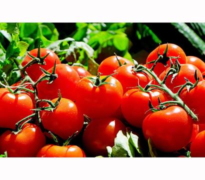 Bioland Tomate, rundfrüchtig