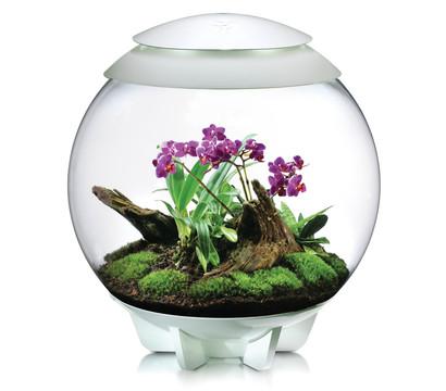 biOrb® Terrarium AIR 60