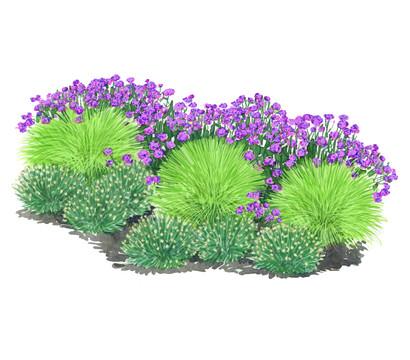 Bodendeckergräser-Paket 'Blütenhighlight'