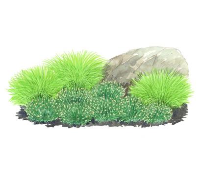 Bodendeckergräser-Paket 'Sonnengarten'