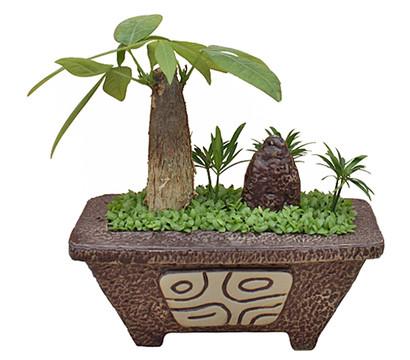 bonsai little tahiti im topf 18 23 cm w ldchen dehner. Black Bedroom Furniture Sets. Home Design Ideas
