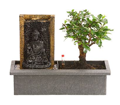 Bonsai, mit Brunnen