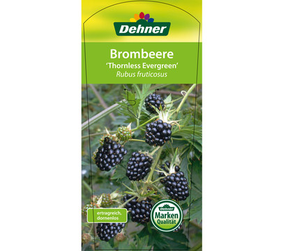 Brombeere 39 thornless evergreen 39 dehner garten center for Pflanzen evergreen