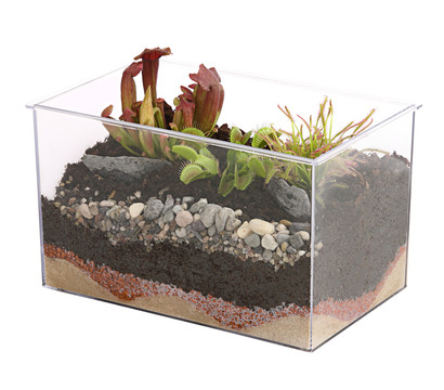 carnivoren fleischfressende pflanzen im aquarium 25 x 17 x 20 cm dehner garten center. Black Bedroom Furniture Sets. Home Design Ideas