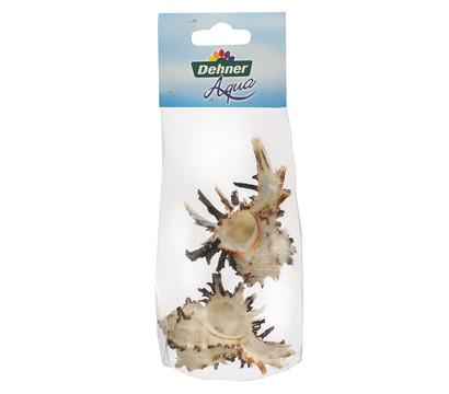 Dehner Aqua Aquariumdeko Schneckengehäuse Murex, 2er Pack
