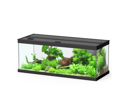 Dehner Aqua Premium Aquarium-Set ProLine 100