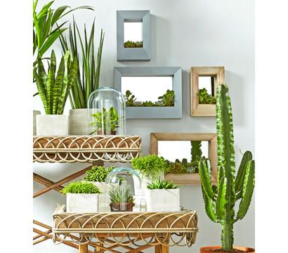 dehner binsenkaktus dehner garten center. Black Bedroom Furniture Sets. Home Design Ideas