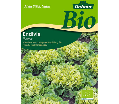 Dehner Bio-Samen Endivien 'Nuance'