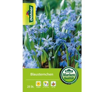 Dehner Blumenzwiebel Blausternchen