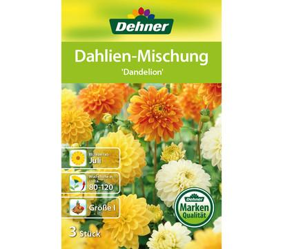 dehner blumenzwiebel dahlien mischung 39 dandelion 39 dehner. Black Bedroom Furniture Sets. Home Design Ideas