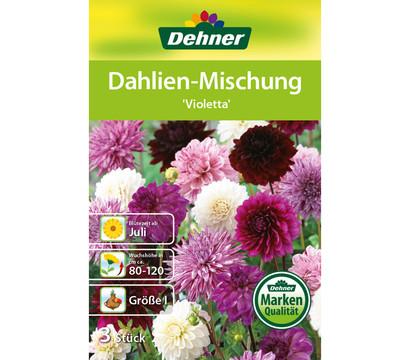 dehner blumenzwiebel dahlien mischung 39 violetta 39 dehner. Black Bedroom Furniture Sets. Home Design Ideas