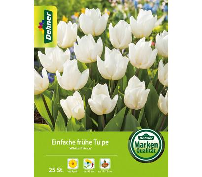 Dehner Blumenzwiebel Einfache frühe Tulpe 'White Prince'