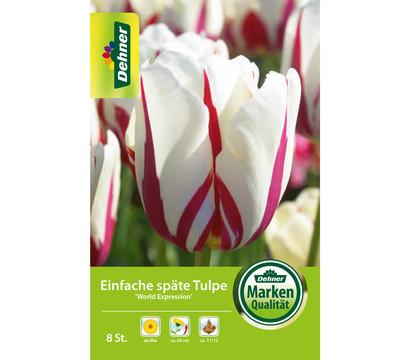 Dehner Blumenzwiebel Einfache späte Tulpe 'World Expression'