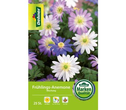 Dehner Blumenzwiebel Frühlings-Anemone Mischung