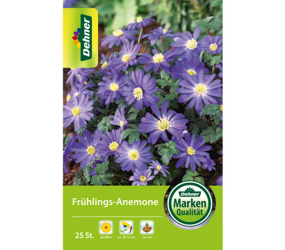 Dehner Blumenzwiebel Frühlings-Anemone