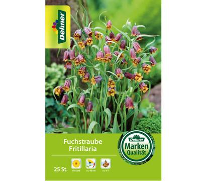 Dehner Blumenzwiebel Fuchstraube Fritillaria