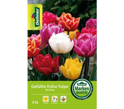 Dehner Blumenzwiebel Gefüllte frühe Tulpe Mischung