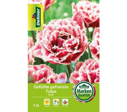 Dehner Blumenzwiebel Gefüllte gefranste Tulpe 'Brest'