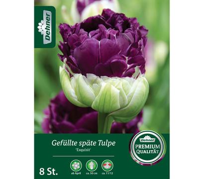 Dehner Blumenzwiebel Gefüllte späte Tulpe 'Exquisit'