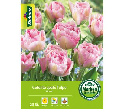 Dehner Blumenzwiebel Gefüllte späte Tulpe 'Finola'